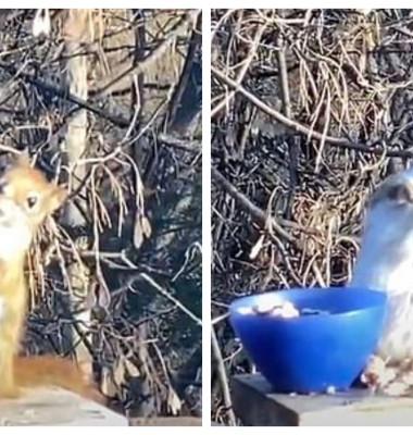 o veveriță s-a îmbătat