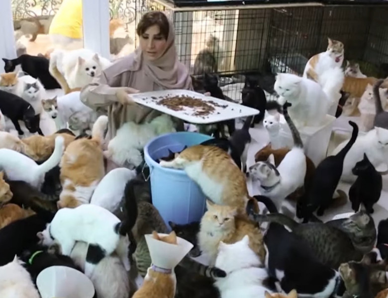 o femeie creste 500 de pisici