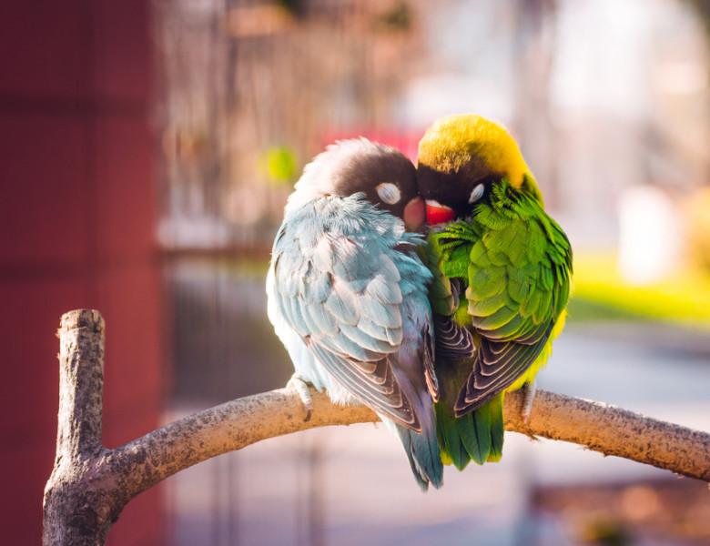 6 cele mai bune pasari ca animale de companie