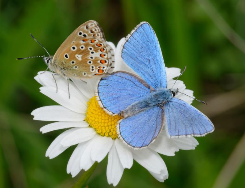 cei mai frumosi fluturi