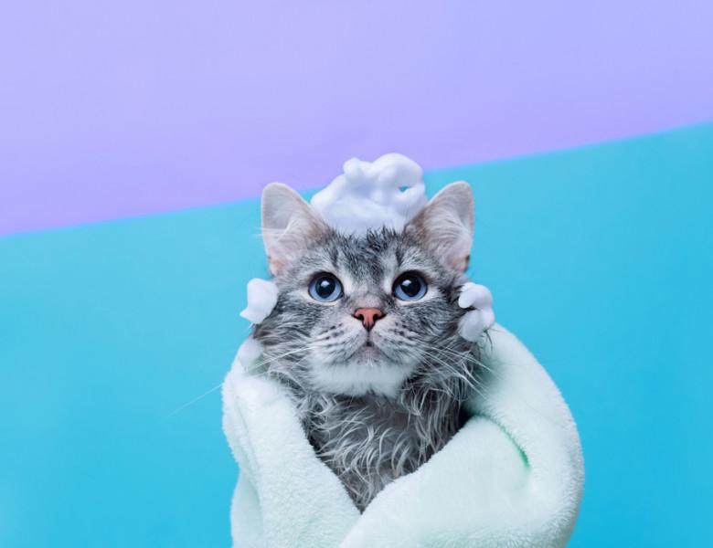 cat de des se spala pisica