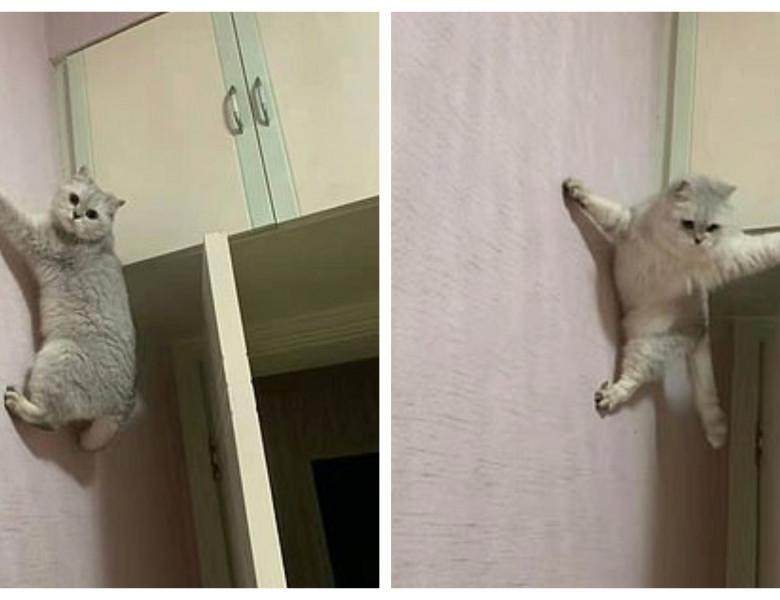 o pisica se catara ca un alpinist profesionist