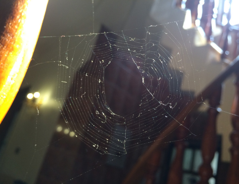 Closeup,Of,Spider,Nest,On,Wooden,Stairs,In,House
