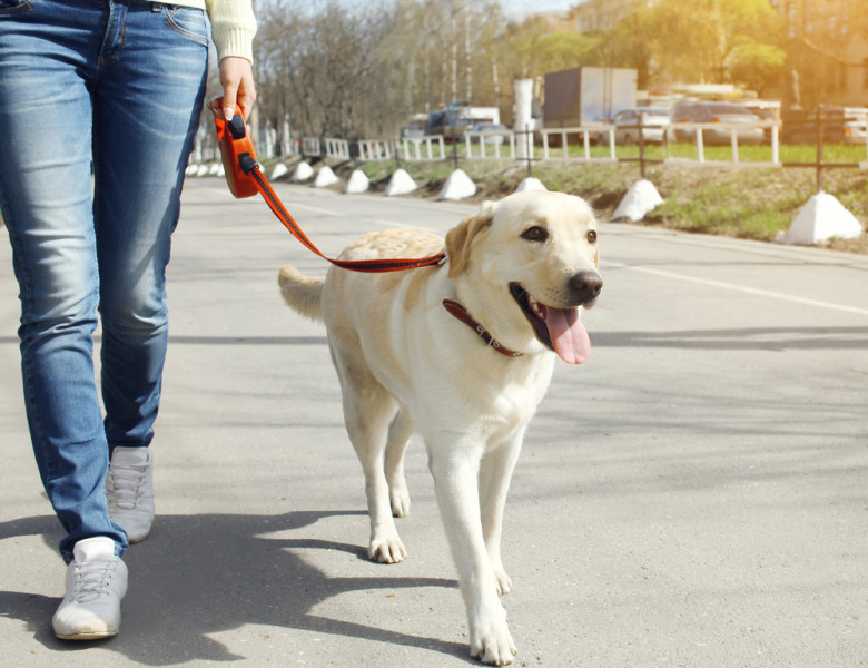 Owner,And,Labrador,Retriever,Dog,Walking,In,The,City