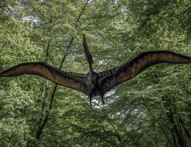 Kosice,,Slovakia,-,May,12:,Model,Of,Dinosaur,Pterodactyl,In