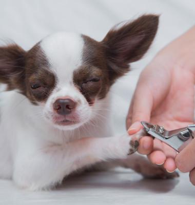 Clipping,Nail,A,Dog