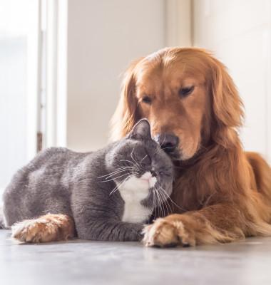5 rase de câini care se înțeleg cu pisicile,