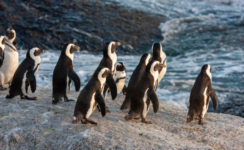 Pinguin,National,Parks,And,Nature,Reserves,Of,South,Africa