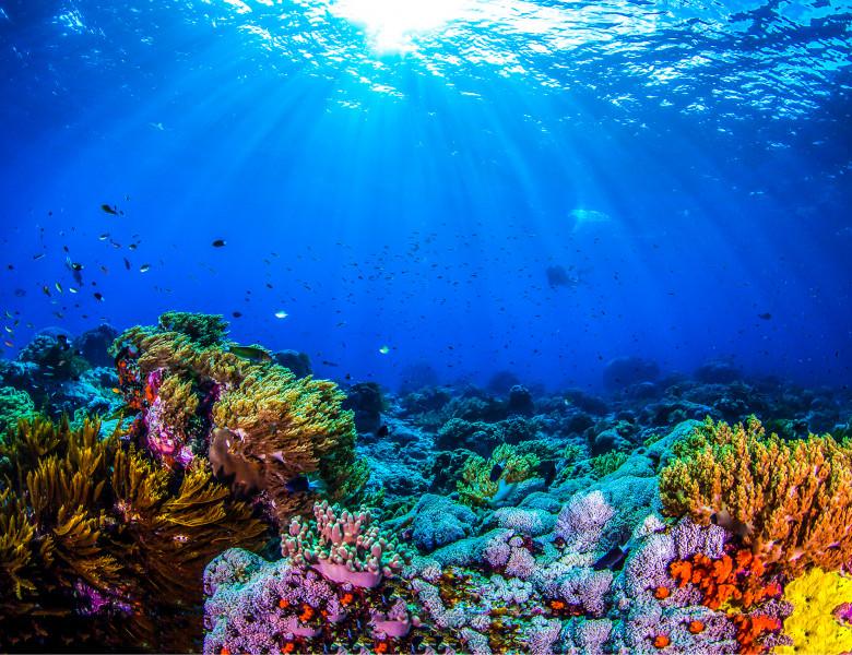 Ocean,Coral,Reef,Underwater.,Sea,World,Under,Water,Background