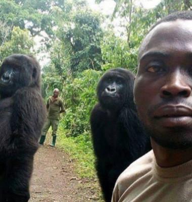 gorilaselfiemain