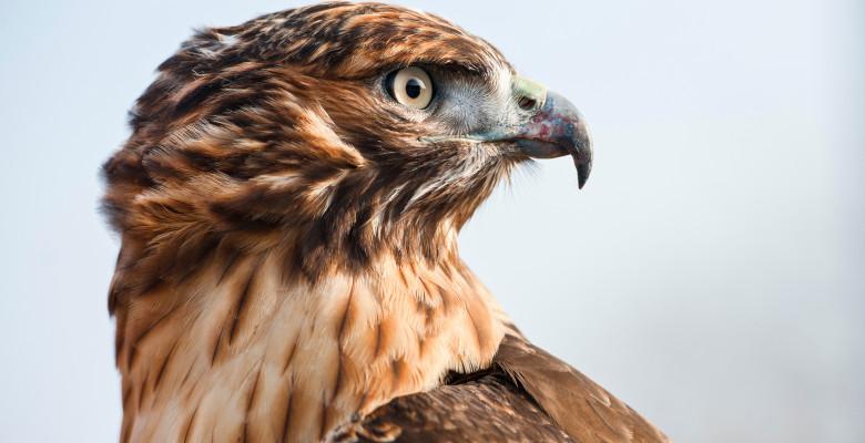 Una din cinci specii de păsări din Europa este amenințată cu dispariția