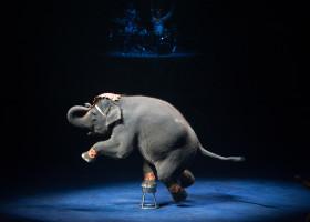 Circus,Elephant,Show