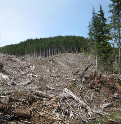 Defrișări de pădure