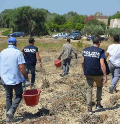 Muncitori români în Italia, pe plantații