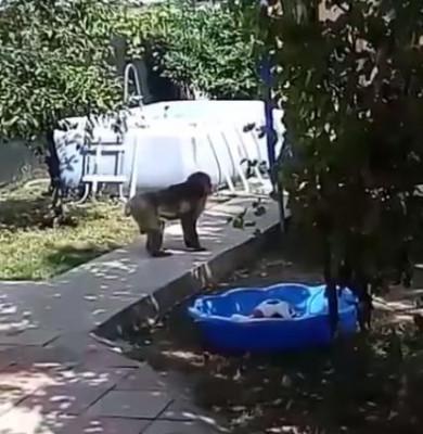 maimuta bucuresti