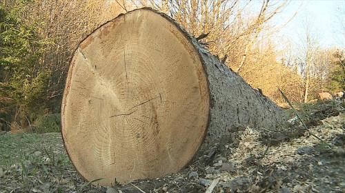 Copac tăiat, defrișări, pădure