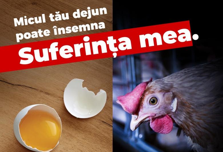 Găini în baterii, ouă stresate