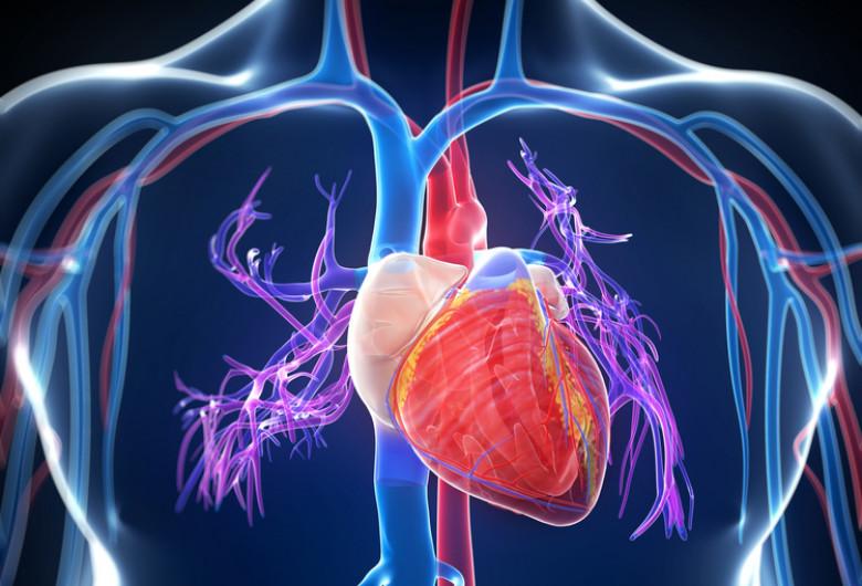 Inimă, boli cardiovasculare, afecțiuni cardiace, sânge