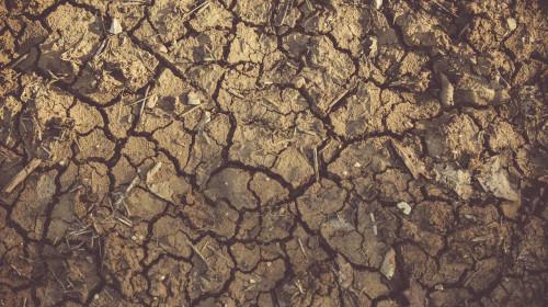 Pământ uscat, secetă, recoltă distrusă, pagube pentru fermieri, agricultură, cultură compromisă