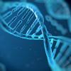 Molecule de ADN