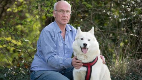 Câine Husky