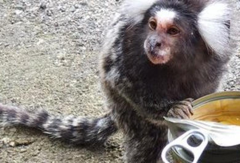 maimuță în gară