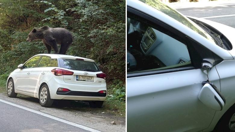 Urs cocoțat pe o mașină