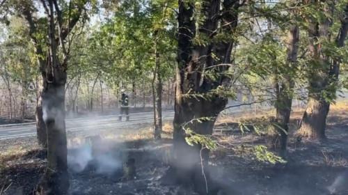 """Incendiu de vegetație uscată în Parcul """"Nicolae Romanescu"""" din Craiova"""