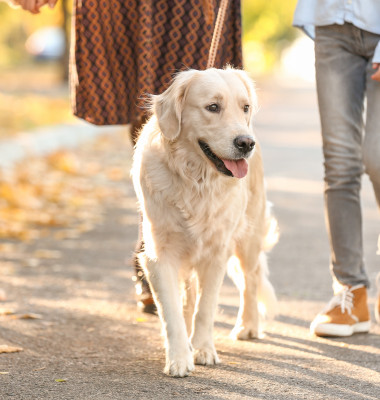 Happy,Family,With,Dog,Walking,In,Autumn,Park