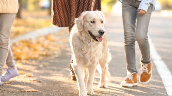 Orașul unde proprietarii de câini trebuie să furnizeze mostre din ADN-ul animalului de companie, pentru a păstra străzile curate