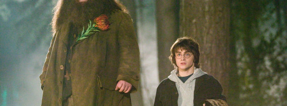 rubeus hagrid harry potter