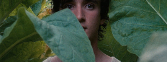 HappyAsLazzaro-Still1-actorAdrianoTardioloweb