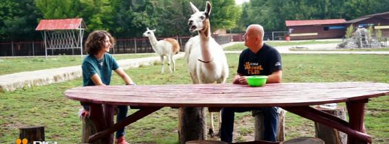 Vizual_CP_04.09.2020_Digi Animal Club revine cu un nou sezon