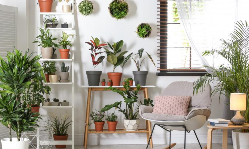 plante de apartament