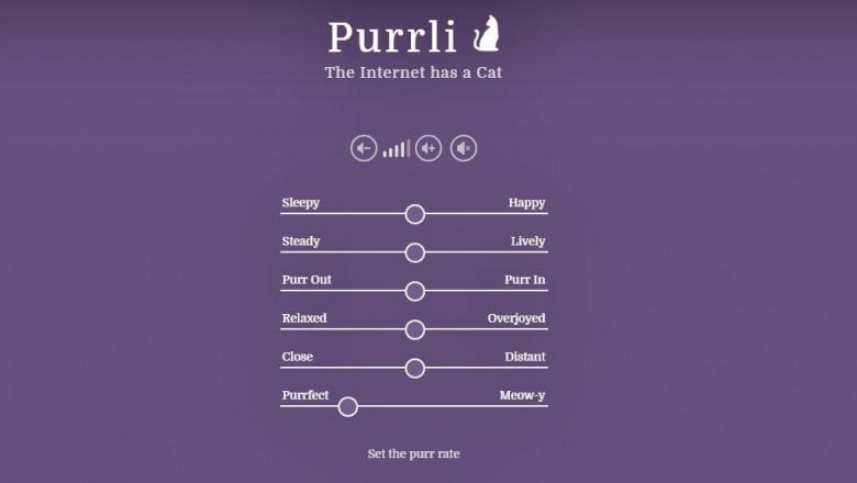 site pisici