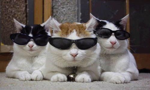 pisici-ochelari-soare