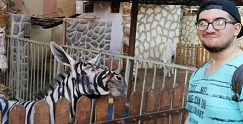 magar-zebra-egipt