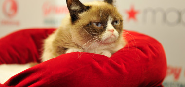 Lifetime's Grumpy Cat's Worst Christmas Ever