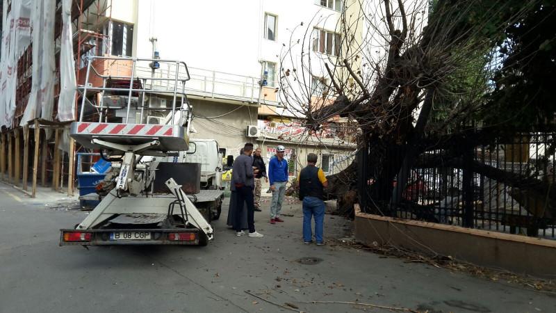 copac cazut capitala