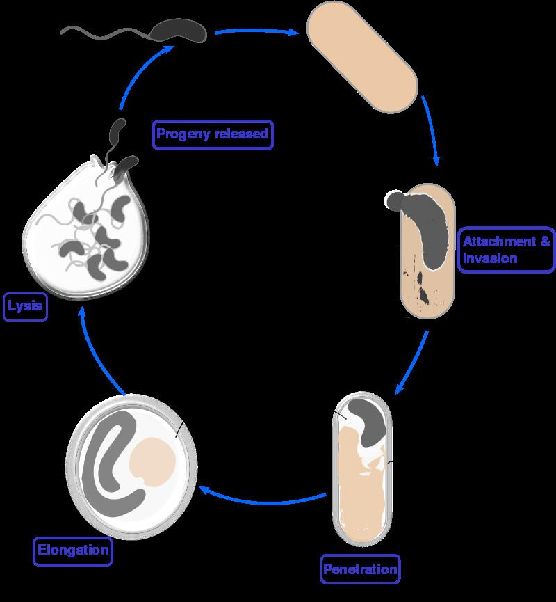 bacterie ucigasa