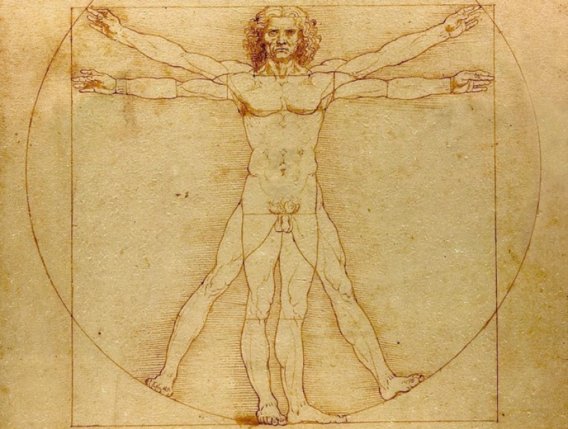 corpul uman imaginea clasica da vinci