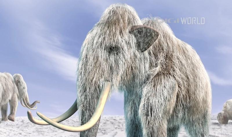 mamuti lanosi