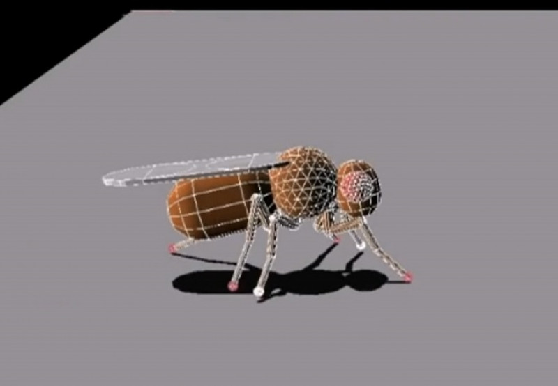 robot insecta
