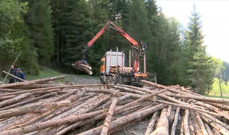 lemn taiat padure