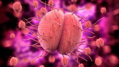 Caz medical unic: un barbat a fost infectat cu o boala cu transmitere sexuala rezistenta la medicamente