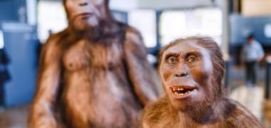 Cercetatorii au descoperit cranii fosilizate ce rescriu istoria a doi stramosi umani. Unde ar fi trait
