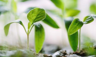 """Plantele simt durere si """"tipa"""" cand sunt taiate sau udate insuficient, sustin cercetatorii"""