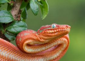 Motivul surprinzator pentru care bebelusilor nu le e frica de serpi