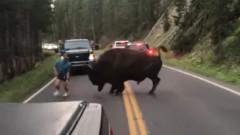 VIDEO: Imagini naucitoare cu un barbat ce vrea sa se ia la bataie cu un bizon. Ce a patit
