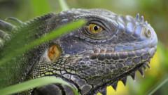 Descoperire uimitoare in Galapagos. S-a gasit o noua specie, care a fost ignorata de cercetatori pana acum